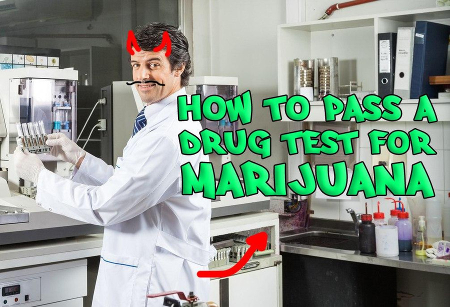 Some Tips How To Pass Your Drug Test For Marijuana Cannasos
