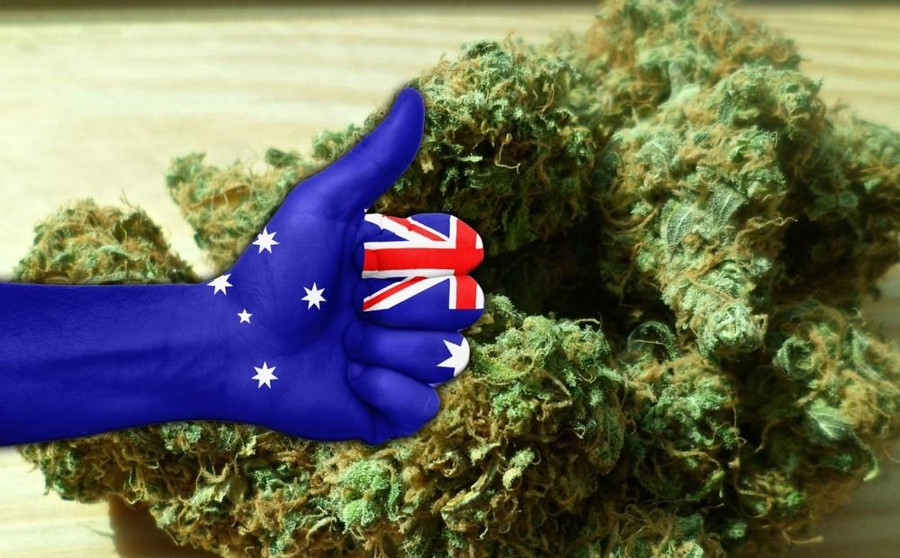legalization of marijuana in australia The australian parliament passed new national laws today paving the way for the use of medicinal cannabis by people with painful and chronic illness.