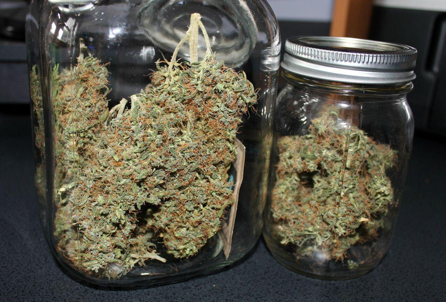 How to Make Your Homegrown Cannabis Taste Better?  4 Easy Tricks for Perfect Buds 3