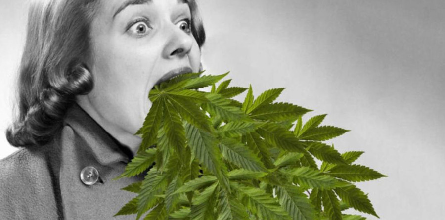 How to Tell if Weed is Good or Bad: Complete Guide 2
