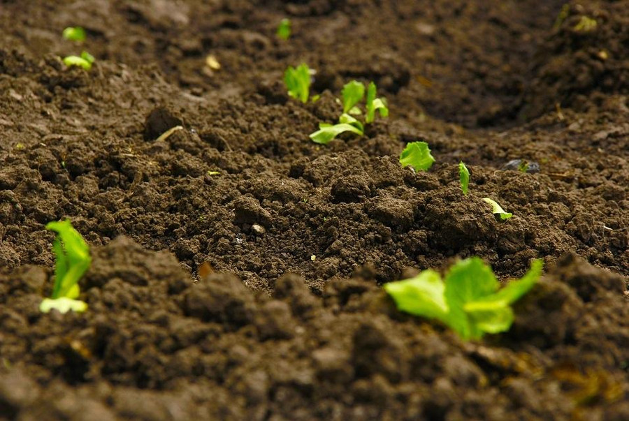 Tips on How to Improve Your Cannabis Soil While on A Budget 1