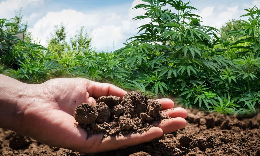 Tips on How to Improve Your Cannabis Soil While on A Budget 3