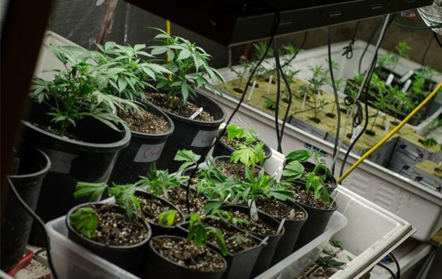 Tips on How to Improve Your Cannabis Soil While on A Budget 4