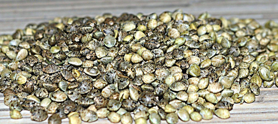 What Are Auto Flowering Seeds? 1