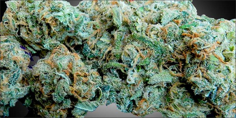 Blue Dream Cannabis Strain Information / CannaSOS