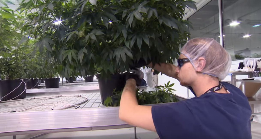 This is How Cannabis Legalization Provides Jobs 1